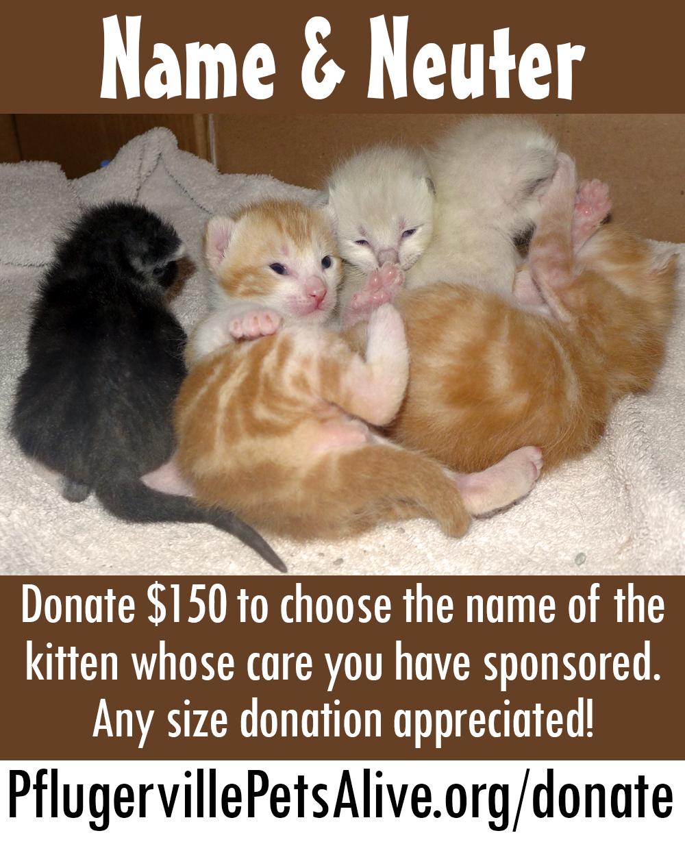 Name & Neuter! Kitten Care Sponsors Needed