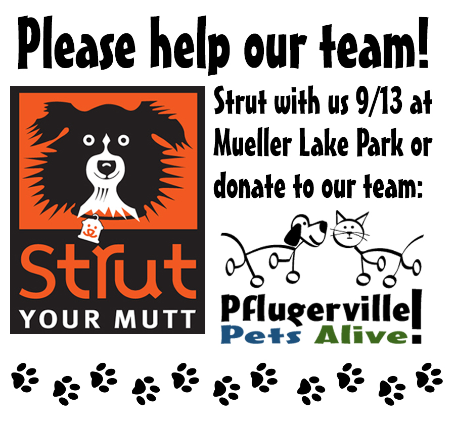 Strut Your Mutt 2014 | 9/13 | Please Join Us or Support Our Team