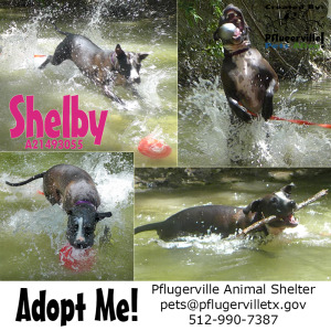 shelby creek flier