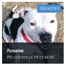 Help Rosalee get Heartworm treatment: Vote through Jan 22