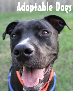 adoptabledogs