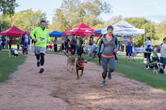 Dogs and people running